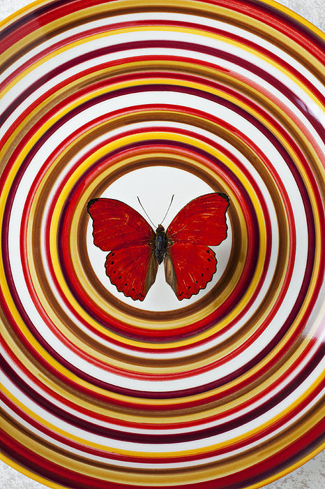 Red Butterfly Plate Circle Center Photograph - Red Butterfly On Plate With Many Circles by Garry Gay
