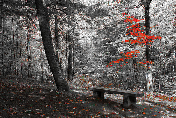 forest Canvas Prints Photograph - Reds In The Woods by Aimelle