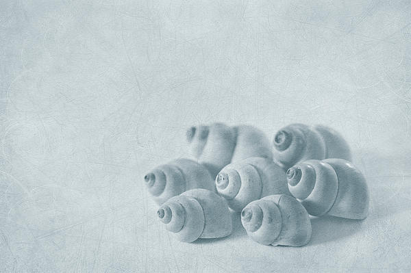 Shell Photograph - Return To Innocence by Evelina Kremsdorf