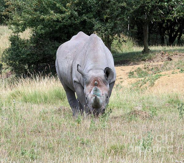 Rhinocerous Photograph - Rhinocerous 13 by Ruth Hallam