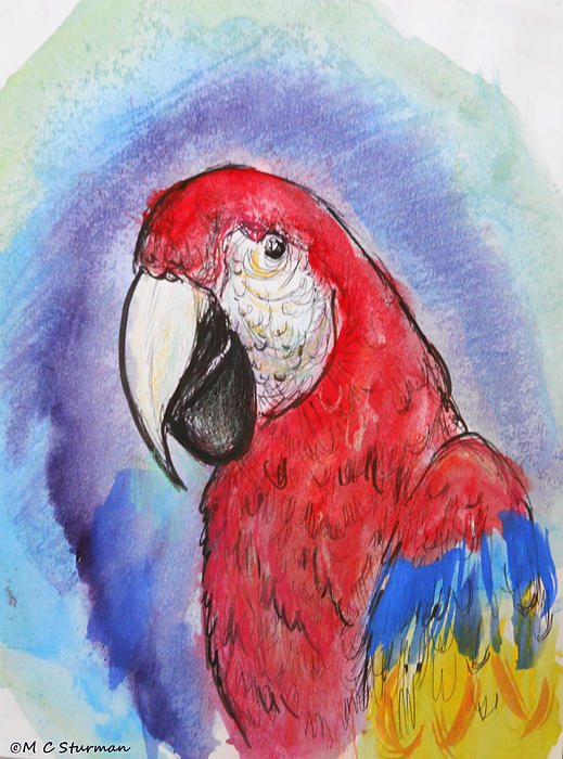 Scarlet Macaw Mixed Media - Scarlet Macaw by M C Sturman