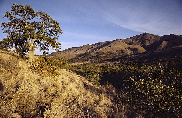 North America Photograph - Scenic View Of The Yakima Valley by Sisse Brimberg