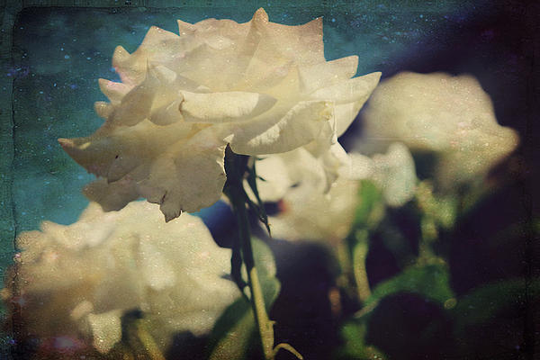 Flowers Photograph - Scent by Laurie Search