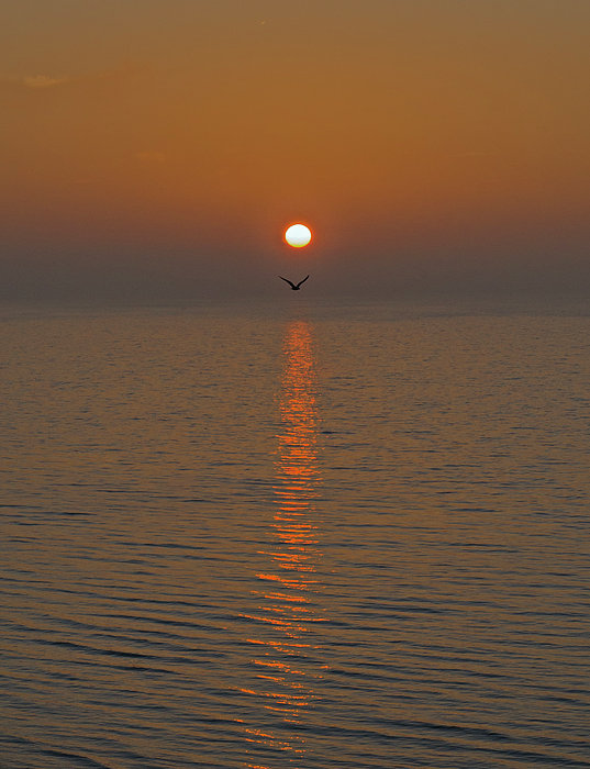 Sunrise Photograph - Seagull At First Light by Gary Eason