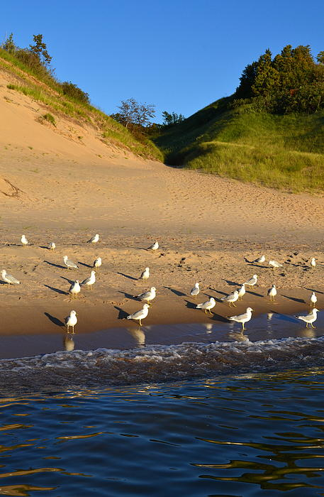 Lake Michigan Photograph - Seagulls At The Bowl by Michelle Calkins