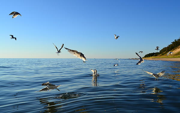 Lake Michigan Photograph - Seagulls Over Lake Michigan by Michelle Calkins