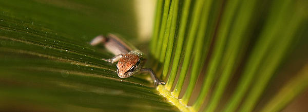 Lizard Photograph - Searching by David Paul Murray