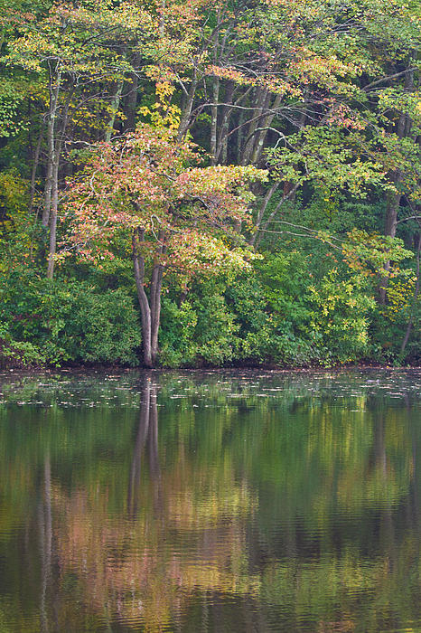 Autumn Photograph - Seasons Change by Karol Livote