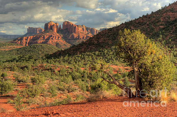 Hdr Photograph - Sedona Red Rock Viewpoint by Sandra Bronstein