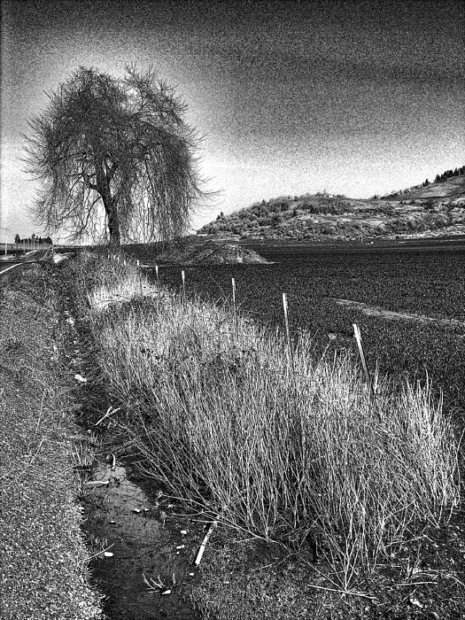 Charcoal Photograph - Shaggy Tree by Bonnie Bruno