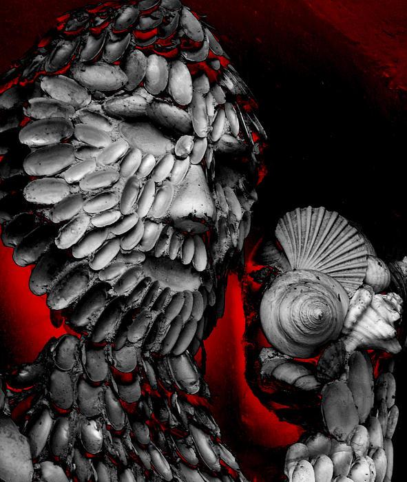 Shell Photograph - Shell Man by Lori Seaman