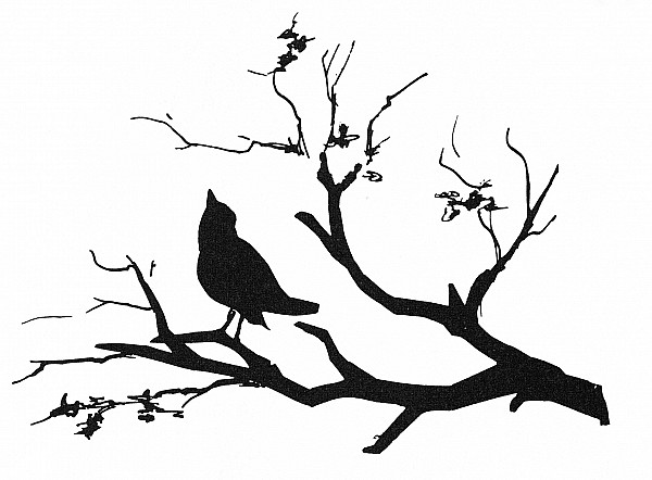 Biology Photograph - Silhouette: Bird On Branch by Granger