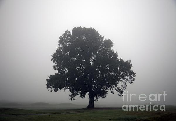 Tree Photograph - Simplicity by Amanda Barcon