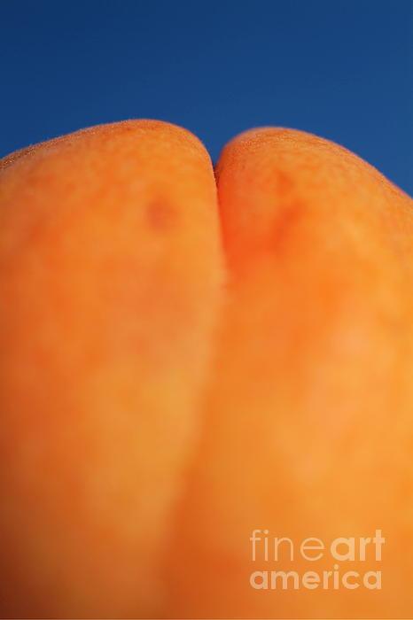 Apricot Photograph - Single Ripe Apricot by Sami Sarkis