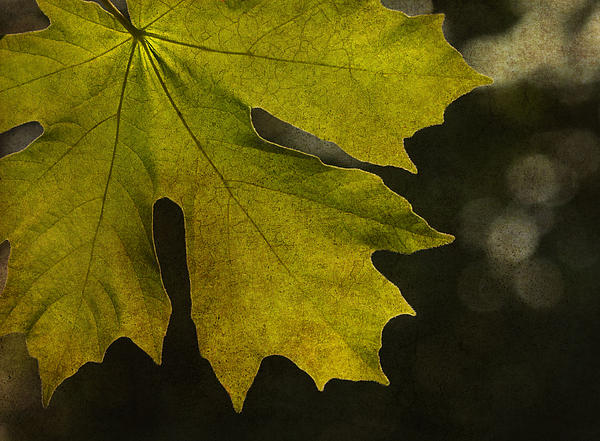 Autumn Photograph - So It Begins by Rebecca Cozart