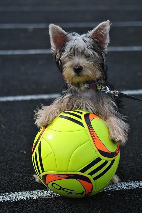 Soccer Photograph - Soccer Dog by Dawn Moreland