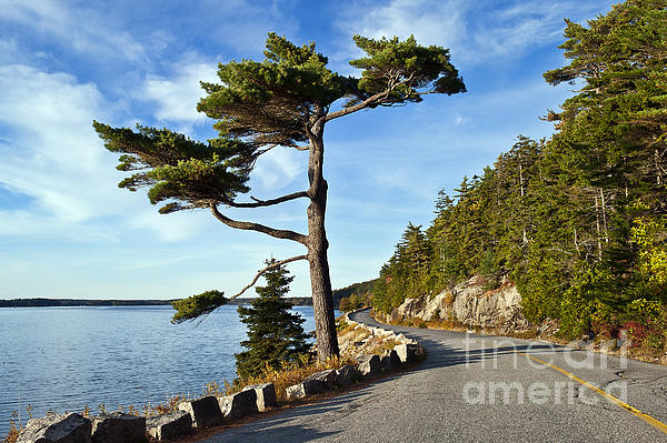Acadia Photograph - Somes Sound Maine by John Greim