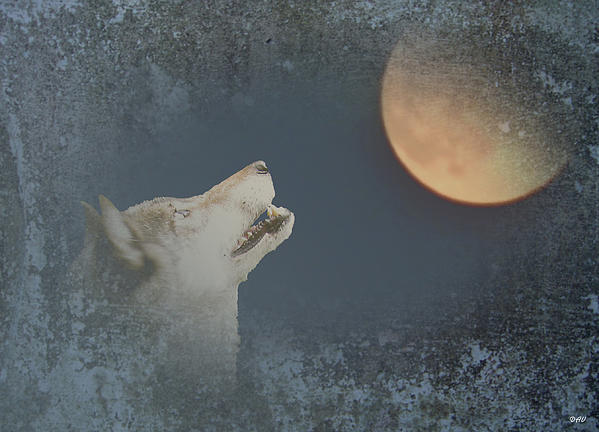 Song To The Moon Photograph - Song To The Moon by Debra     Vatalaro