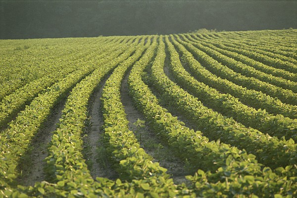 Foods Photograph - Soybean Crop Ready To Harvest by Brian Gordon Green