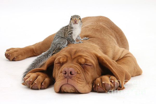 Nature Photograph - Squirrel And Puppy by Mark Taylor
