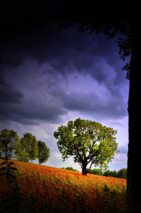 Tree Photograph - Standing Proud by Emily Stauring