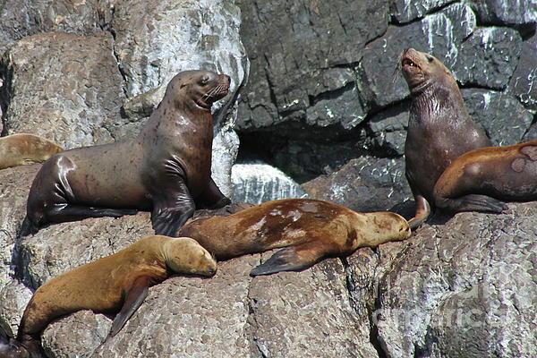 Sea Life Photograph - Steller by Rick  Monyahan