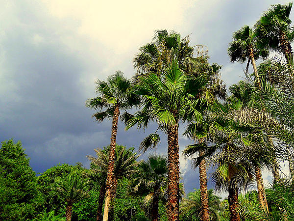 Stormy Skies Photograph - Stormy Skies And Palms by Sheri McLeroy