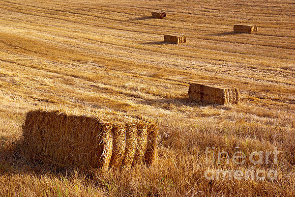 Agriculture Photograph - Straw Field by Carlos Caetano