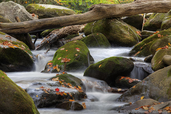 Stream Photograph - Stream Of Thought by Charles Warren