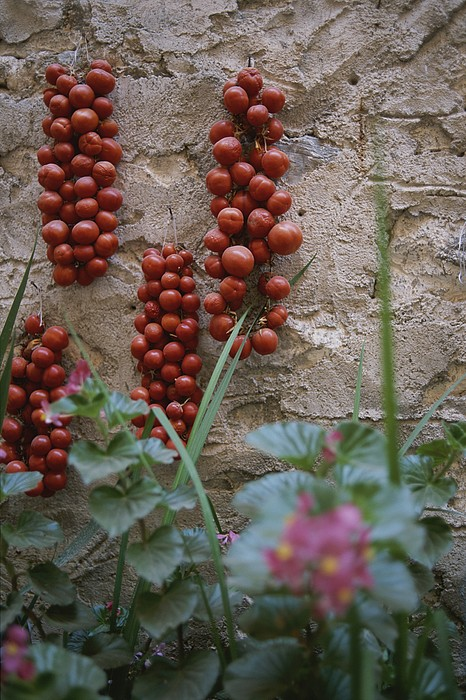 Europe Photograph - Strings Of Tomatoes Dry On A Wall by Tino Soriano