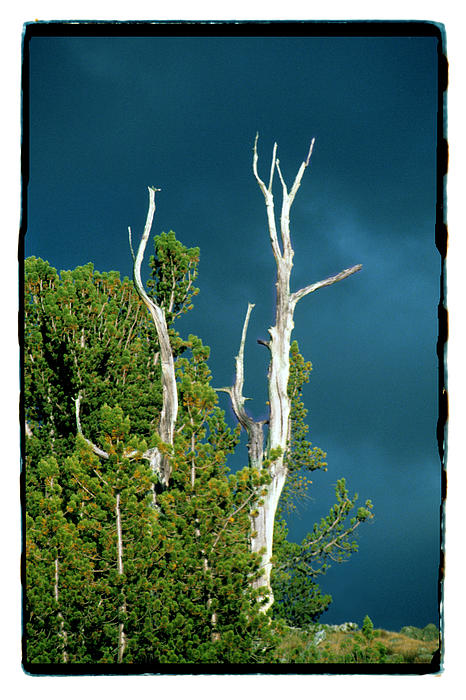 Summer Storm Photograph - Summer Storm - Tuolumne Meadows by Noah Brooks