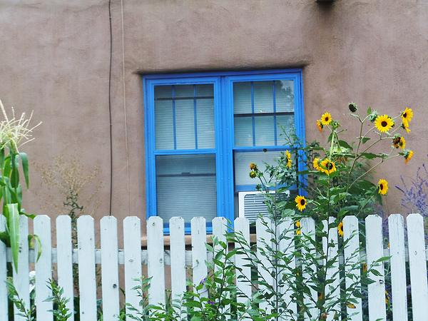 Sunflower Window  Photograph by Vicki Lomay