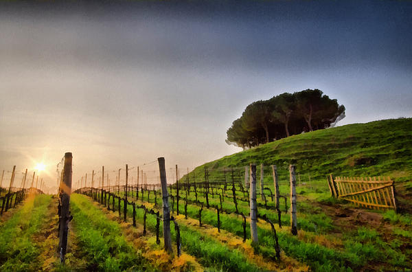 Hills Painting - Sunrise Through The Vineyards by Matteo Zonta