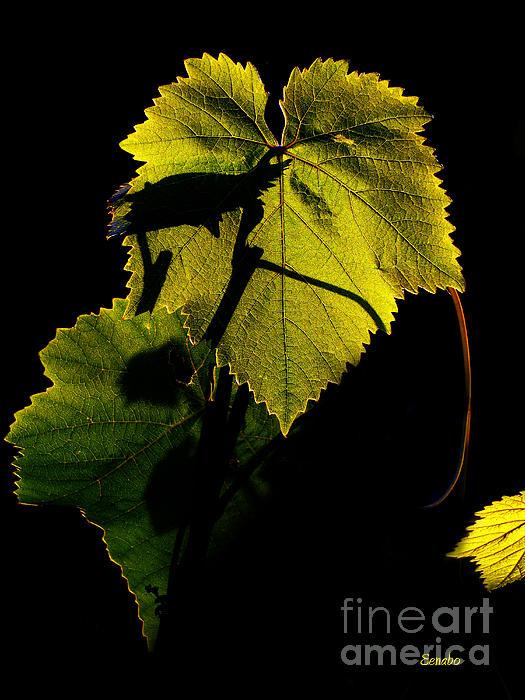 Vine Leaf Photograph - Sunset In My Garden by Eena Bo