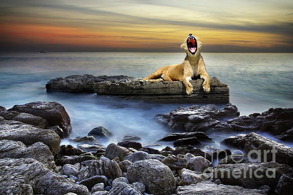 African Photograph - Surreal Lioness by Carlos Caetano