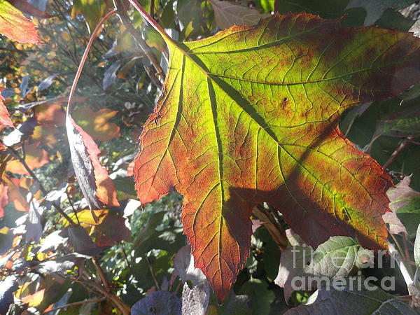 Leaves Photograph - Surrender by Trish Hale