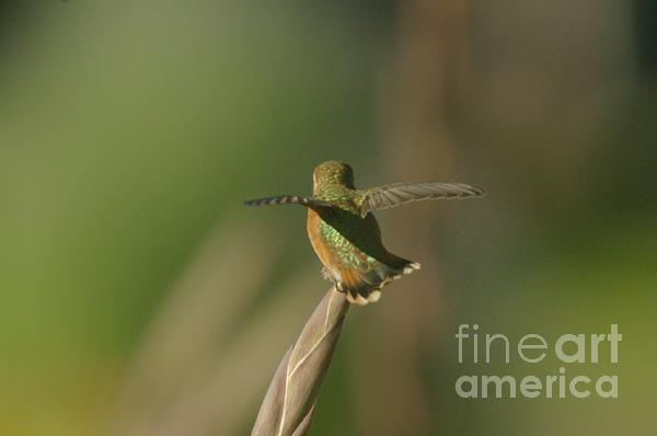Wings Photograph - Take Off  by Jeff Swan