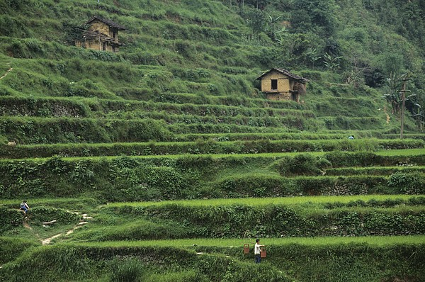Outdoors Photograph - Terraces For Agriculture by Raymond Gehman