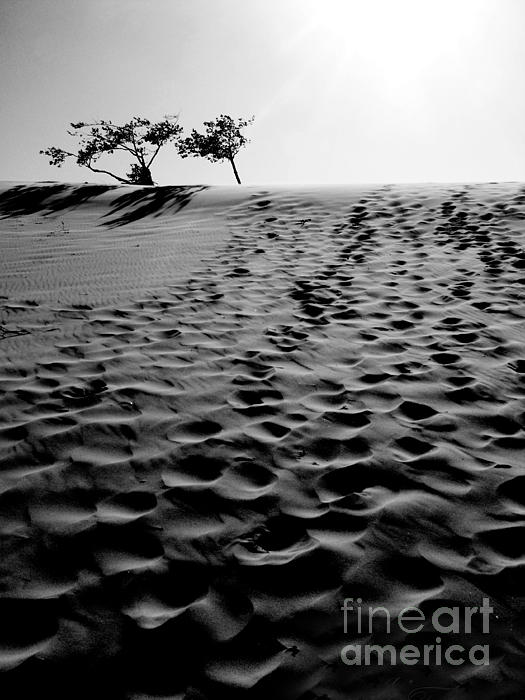 Oregon Photograph - The Dunes At Dusk by Tara Turner