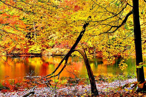 Autumn Photograph - The Final Bough by Kristin Elmquist
