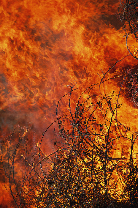 North America Photograph - The Flames Of A Controlled Fire by Joel Sartore