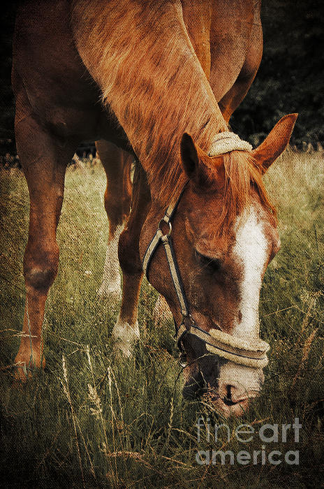 Horse Photograph - The Horse by Angela Doelling AD DESIGN Photo and PhotoArt