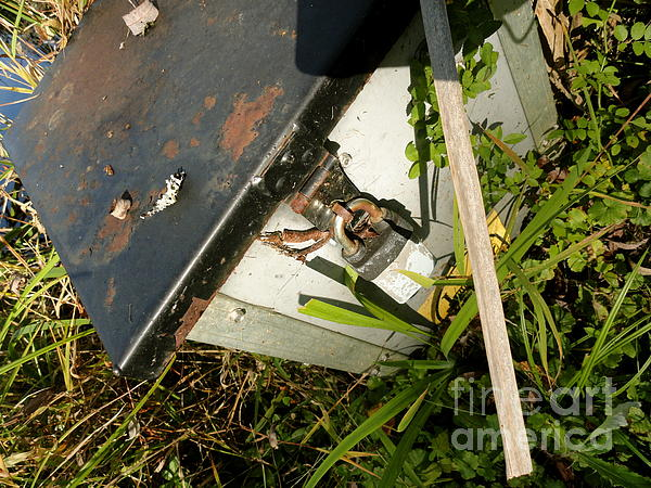 Leaves Photograph - The Lock Box by Trish Hale