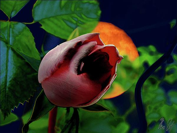 Moon Photograph - The Moon And The Rose by Helmut Rottler