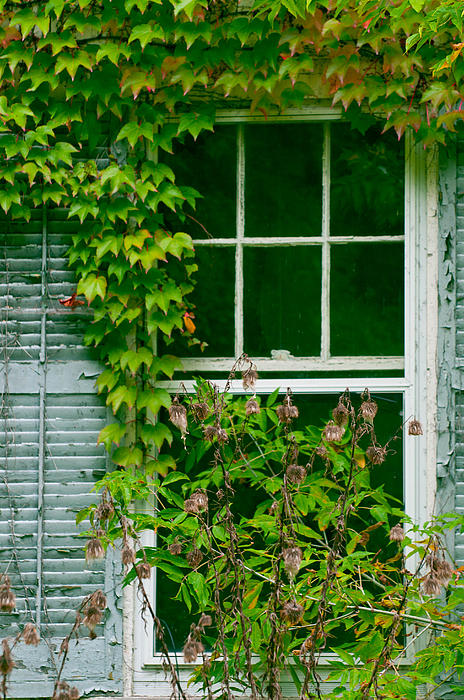 Window Prints Photograph - The Other Window by Lisa  DiFruscio