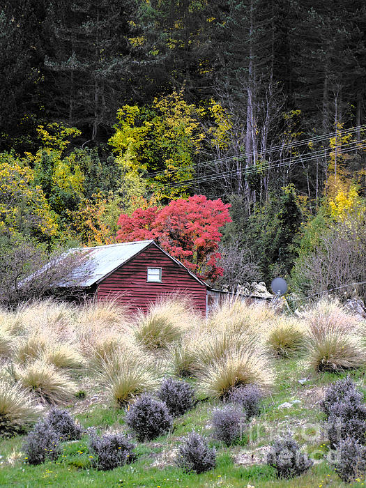 Shed Photograph - The Red Shed by Karen Lewis