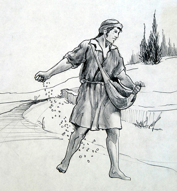 Sower Drawing - The Sower by Ron Cantrell