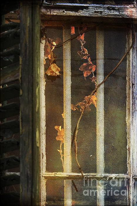 Vine Photograph - The Vine Inside by Sari Sauls