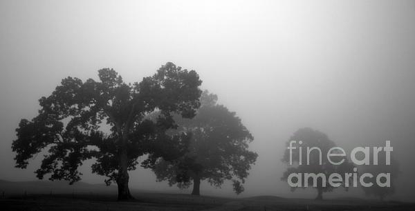 Fog Photograph - Through Time by Amanda Barcon