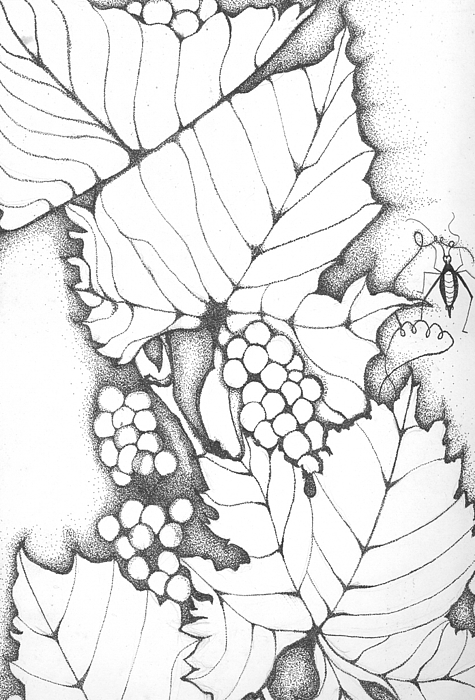 Grape Leaves Drawing - Time To Make Wine by Sheba Goldstein